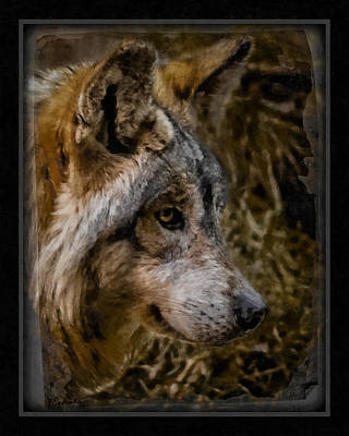 Stare Of The Wolf Art Print by Ernie Echols