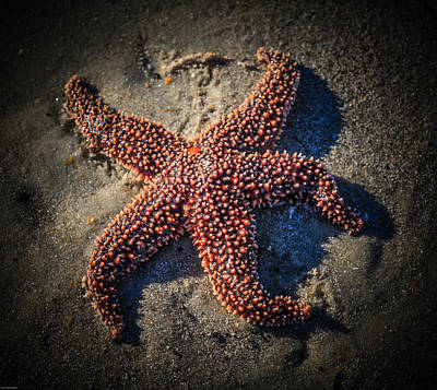 Photograph - Starfish 1 by Kathleen Scanlan