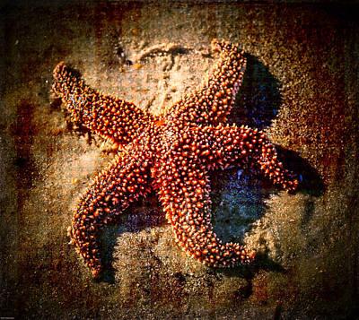Photograph - Starfish 2 by Kathleen Scanlan