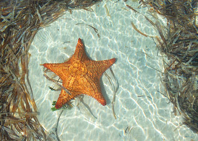 Photograph - Starfish 2 Of Bottom Harbour Sound by Duane McCullough
