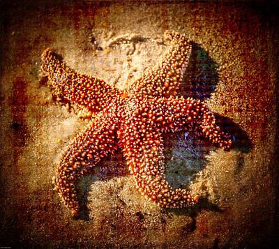 Starfish 3 Art Print by Kathleen Scanlan