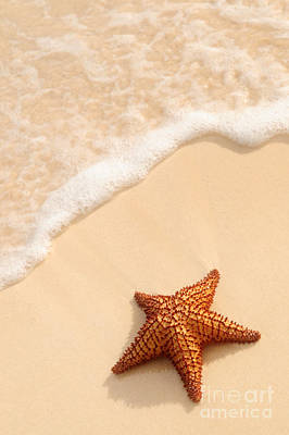Animals Photos - Starfish and ocean wave by Elena Elisseeva