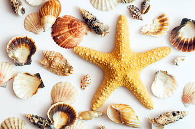 Biology Photograph - Starfish And Shells by Michal Bednarek