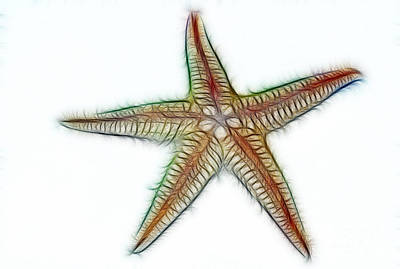 Starfish Art 2 Art Print