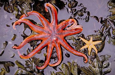 Starfish In Tidal Pool Art Print by Mark Newman