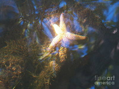 Photograph - Starfish by Judy Via-Wolff