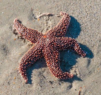 Photograph - Starfish by Kathleen Scanlan