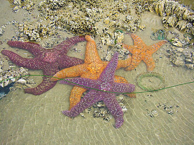 Photograph - Starfish Love-oregon Coast by Cheryl Perin