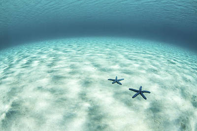 The Sea Of Tranquility Photograph - Starfish On A Brightly Lit Seafloor by Ethan Daniels
