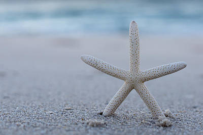 Photograph - Starfish On Beach Seaside New Jersey by Terry DeLuco