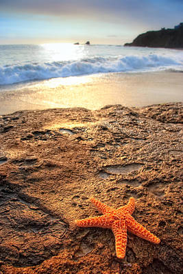 Photograph - Starfish On Rock by Douglas Pulsipher