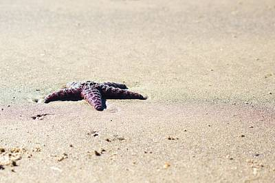 Photograph - Starfish On The Beach by Angi Parks