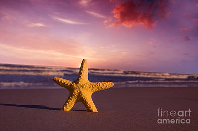 Tropical Photograph - Starfish On The Beach At Sunset by Michal Bednarek