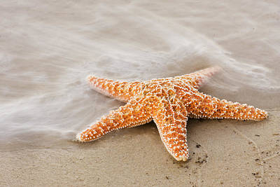 Photograph - Starfish On The Beach by Bob Decker