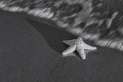 Oceanside Photograph - Starfish On The Beach Bw by Susan Candelario