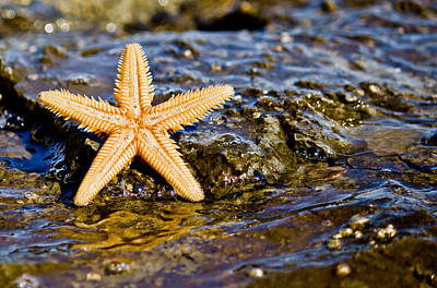 Photograph - Starfish On The Rock In The Sea Water by Brch Photography