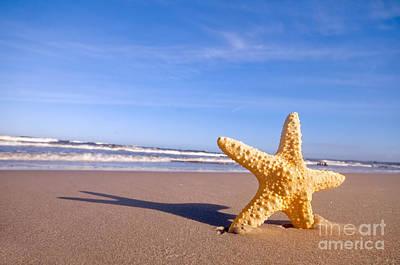 Travel - Starfish on the summer beach by Michal Bednarek