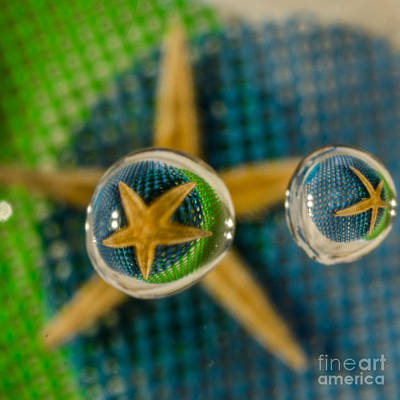 Still Life Royalty-Free and Rights-Managed Images - Starfish Refraction by Donna Brown