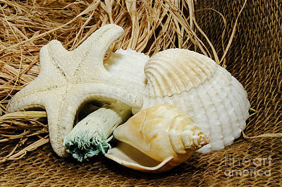Photograph - Starfish Shells And Driftwood by MaryJane Armstrong