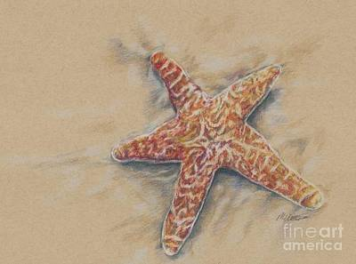 Drawing - Starfish Study by Meagan  Visser