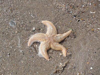 Art Print featuring the photograph Starfish by Tiffany Erdman
