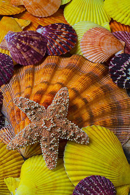 Starfish With Seashells Art Print by Garry Gay