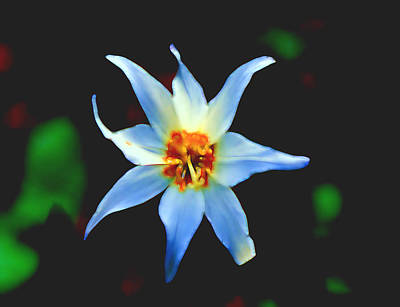 World Forgotten - Starflower by Cathy Anderson