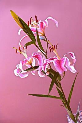 Photograph - Stargazer Lilies Rectangular Frame by Byron Varvarigos