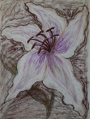 Lilies Drawings - Stargazer Lily in Pastel by Dawna Morton