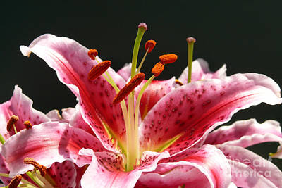 Art Print featuring the photograph Stargazer Lily by Maria Janicki
