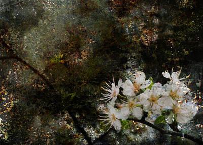 Speckled Granite Photograph - Stargazing Plum Blossoms by Carla Parris