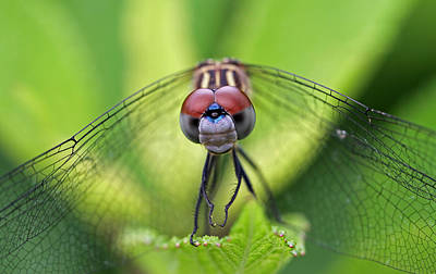 Darter Photograph - Staring Contest by Juergen Roth