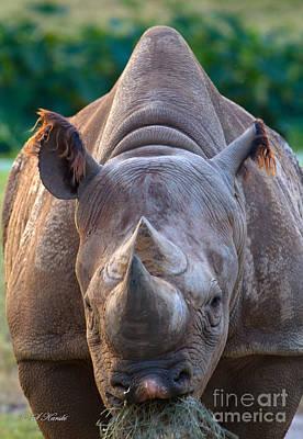 Staring Down Rhino Art Print