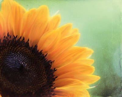 Sunflower Art Photograph - Staring Into The Sun by Amy Tyler