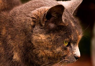 Photograph - Staring Ziggy by Haren Images- Kriss Haren