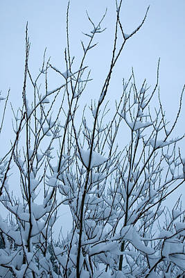 Stark Beauty - Snow On Branches Art Print by Denise Beverly