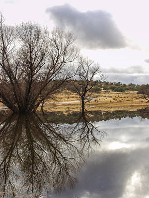 Photograph - Stark Reflections by Beverly Parks