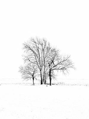 Photograph - Stark by Tim Good