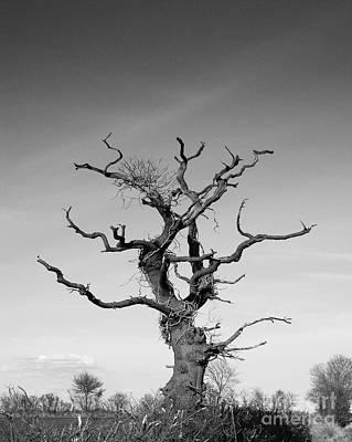 Stark Tree Art Print by Pixel Chimp