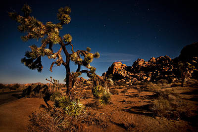 Featured Images Photograph - Starlight And Moonlight At Joshua by Peter Tellone