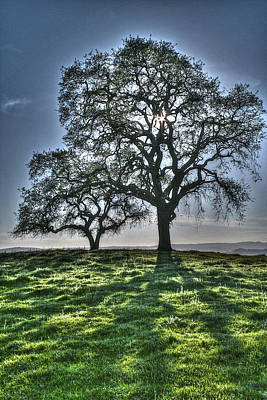 Photograph - Starlight Tree by SC Heffner