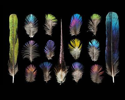 Starlings Mixed Media - Starling by Chris Maynard