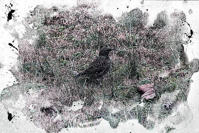 Starlings Digital Art - Starling by EricaMaxine  Price