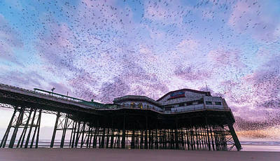 Starlings Wall Art - Photograph - Starling Flock Over Blackpool North Pier by Simon Booth
