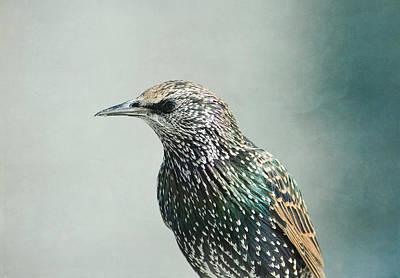 Photograph - Starling  by Fraida Gutovich