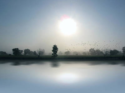 Starlings Misty Morning - Limited Edition Art Print
