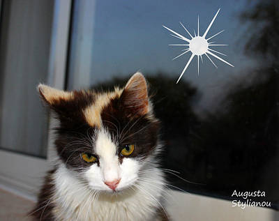 Photograph - Starry Cat by Augusta Stylianou