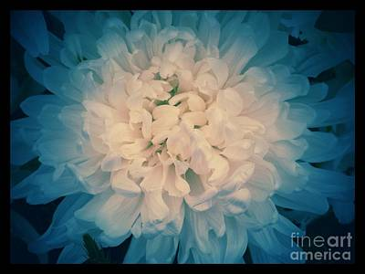 Photograph - Starry Flower by Joan-Violet Stretch