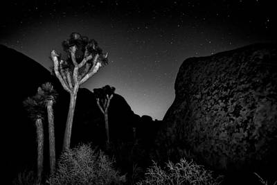 Featured Images Photograph - Stars Above Joshua Tree by Peter Tellone