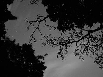 Photograph - Stars And Branches by Tarey Potter